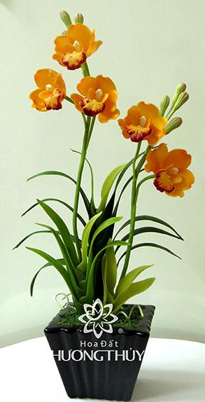 Hoa Đất Hương Thủy-Địa lan cam