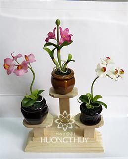 Hoa Đất Hương Thủy-Cây nhí 1