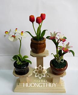 Hoa Đất Hương Thủy-Cây nhí 2