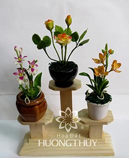 Hoa Đất Hương Thủy-Cây nhí 3