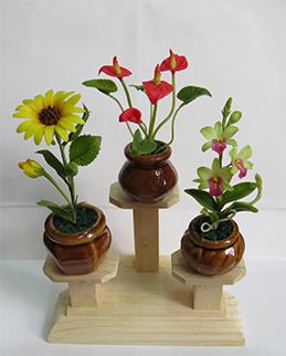 Hoa Đất Hương Thủy-Cây nhí 4