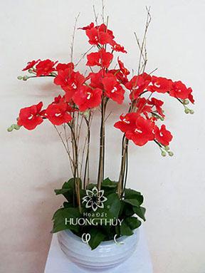 Hoa Đất Hương Thủy-Hồ điệp đỏ