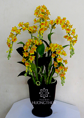 Hoa Đất Hương Thủy-Hoàng lan 5 cành