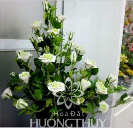 Hoa Đất Hương Thủy-Hoa hồng trắng
