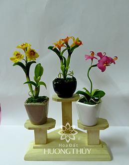 Hoa Đất Hương Thủy- Cây nhí 9