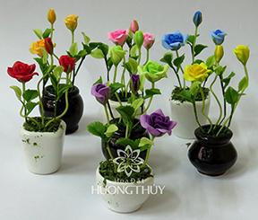 Hoa Đất Hương Thủy – Mẫu hoa hồng nhí các màu