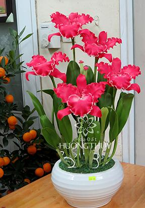 Hoa Đất Hương Thủy-Lan Nữ hoàng size L màu hồng