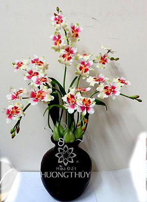Hoa Đất Hương Thủy-Lan Công trắng