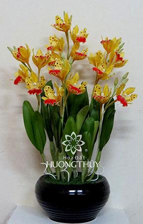Hoa Đất Hương Thủy-Lip-ton Cat màu vàng size L