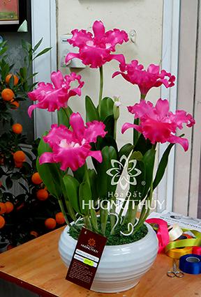 Hoa Đất Hương Thủy-Nữ hoàng tím 5 bông