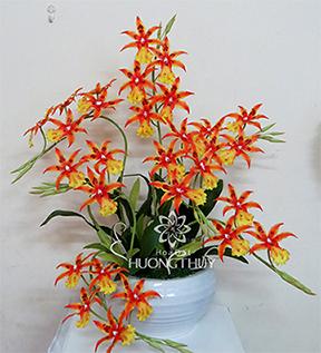 Hoa Đất Hương Thủy-On-xi vàng tô đỏ