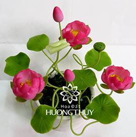 Hoa Đất Hương Thủy-Sen hồng nhỏ