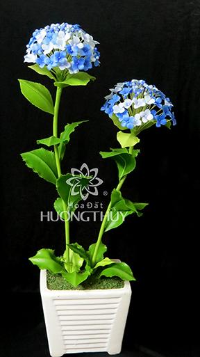 Hoa Đất Hương Thủy- chậu Tú cầu xanh 2 bông