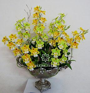Hoa Đất Hương Thủy-Vũ nữ Odonto vàng xanh