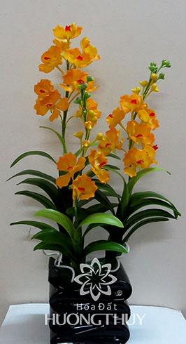 Hoa đất Hương Thủy – Lan Van-đa nước vàng – Cao 60cm – ngang 28cm – sâu 14cm