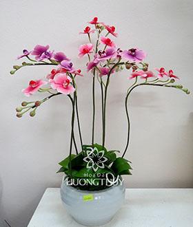 Hoa đất Hương Thủy – Hồ điệp tím hồng cắm dáng tròn – cao 50 – xòe 37cm
