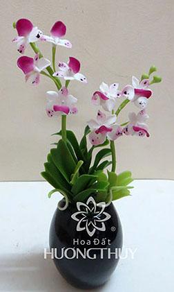 Hoa đất Hương Thủy – Lan Ngọc điểm trắng tím hồng nhỏ