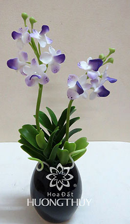 Hoa đất Hương Thủy – Lan Ngọc điểm trắng tím nhỏ