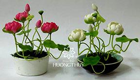 Hoa đất Hương Thủy – Hoa Sen nhí vừa xinh vừa yêu
