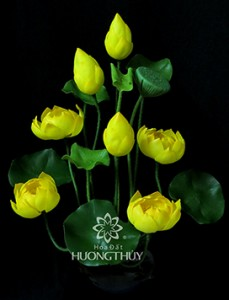 hoa-dat-huong-thuy-hoa-sen (6)