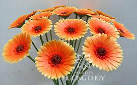 Hoa đất Hương Thủy – Hoa đồng tiền màu cam