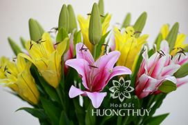 Hoa đất Hương Thủy – Mẫu hoa Ly