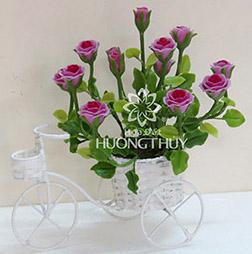 Hoa đất Hương Thủy – Xe đạp hoa hồng tím