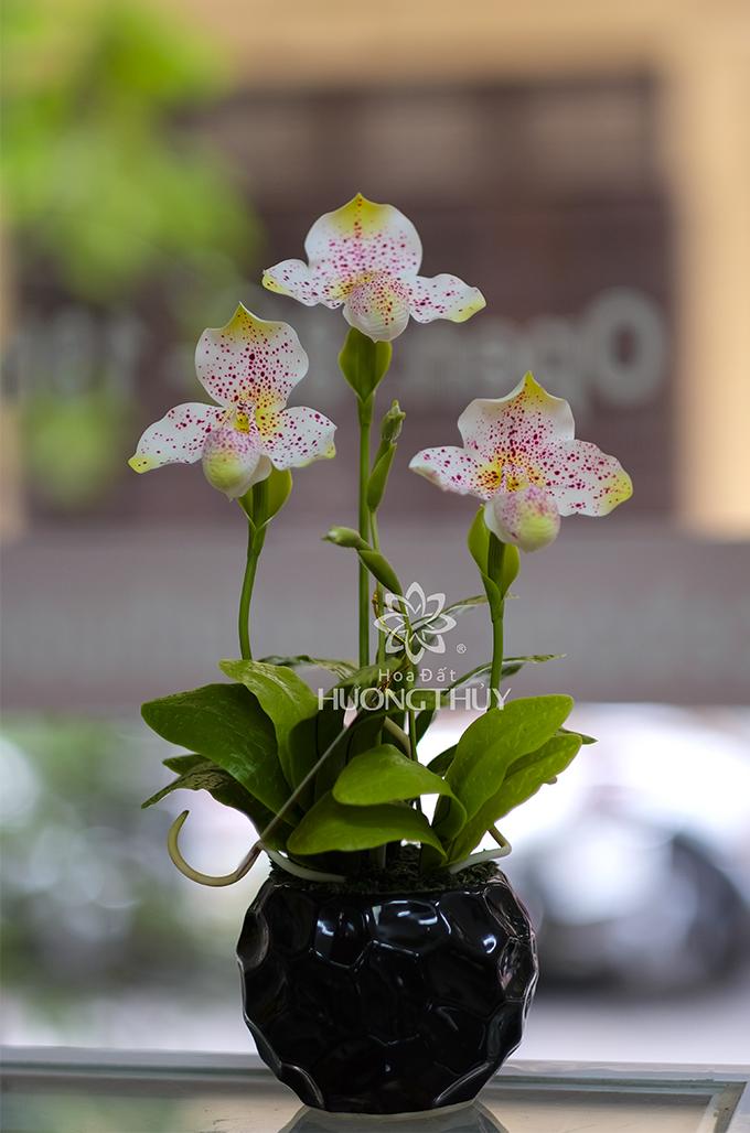 Hoa lan Hài trắng 3 bông