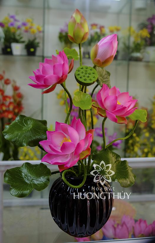 HOA ĐẤT HƯƠNG THỦY – Hoa sen cỡ nhỏ