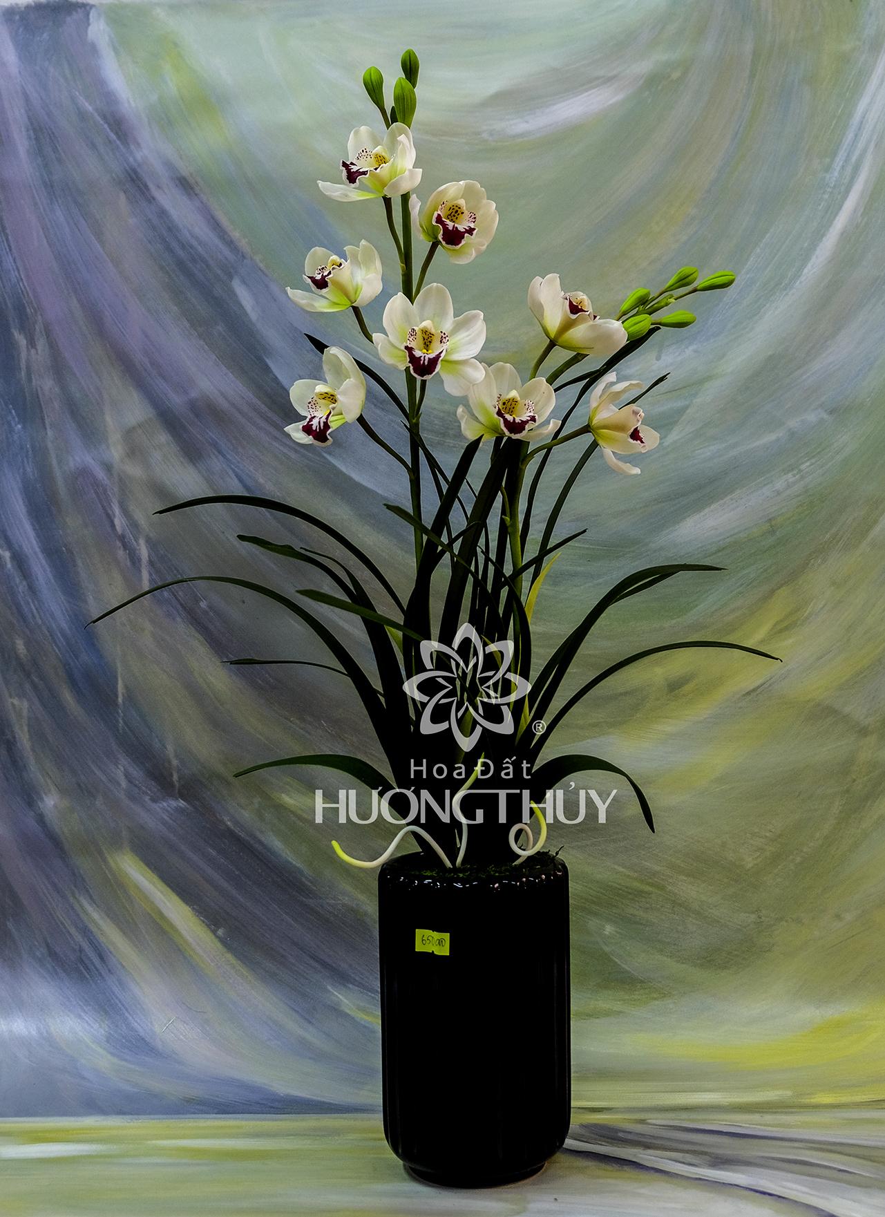 Hoa đất Hương Thủy – Địa lan trắng hai cành cao 65cm, ngang 22cm – sâu 10cm