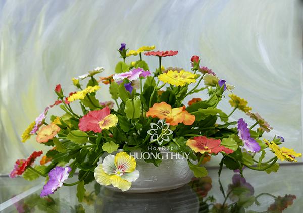 Hoa đất Hương Thủy – Đĩa hoa Păng-xê