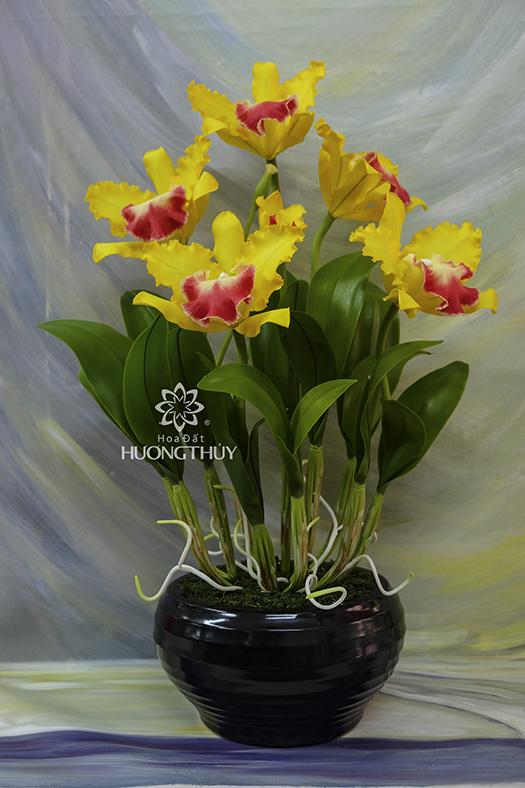 Hoa đất Hương Thủy – Lan Nữ hoàng màu vàng 5 bông cỡ lớn