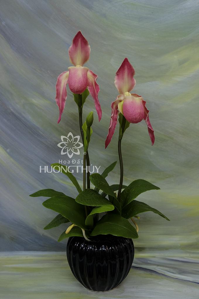 Lan Hài râu màu hồng: cao 43cm – ngang 22cm – sâu 11cm