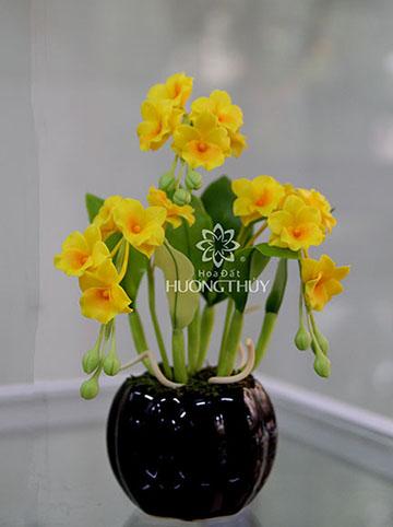 Hoa đất Hương Thủy – Hoàng lan nhỏ 3 chùm cao 22cm