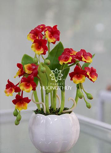 Hoa đất Hương Thủy – Hoàng lan vàng 3 chùm cao 22cm