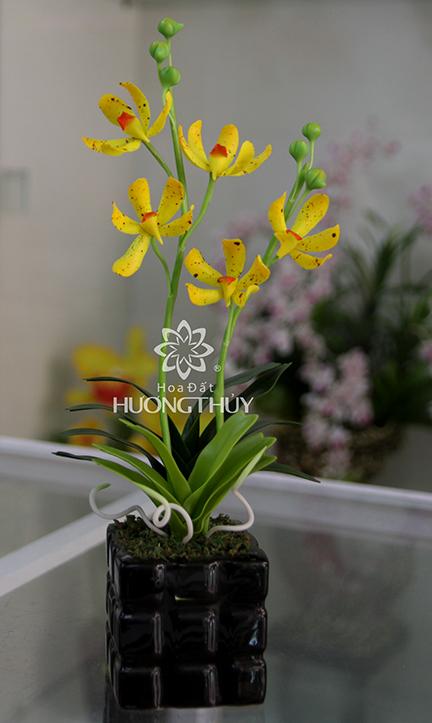 Hoa đất Hương Thủy – Hoa lan nhện vàng cao 30cm