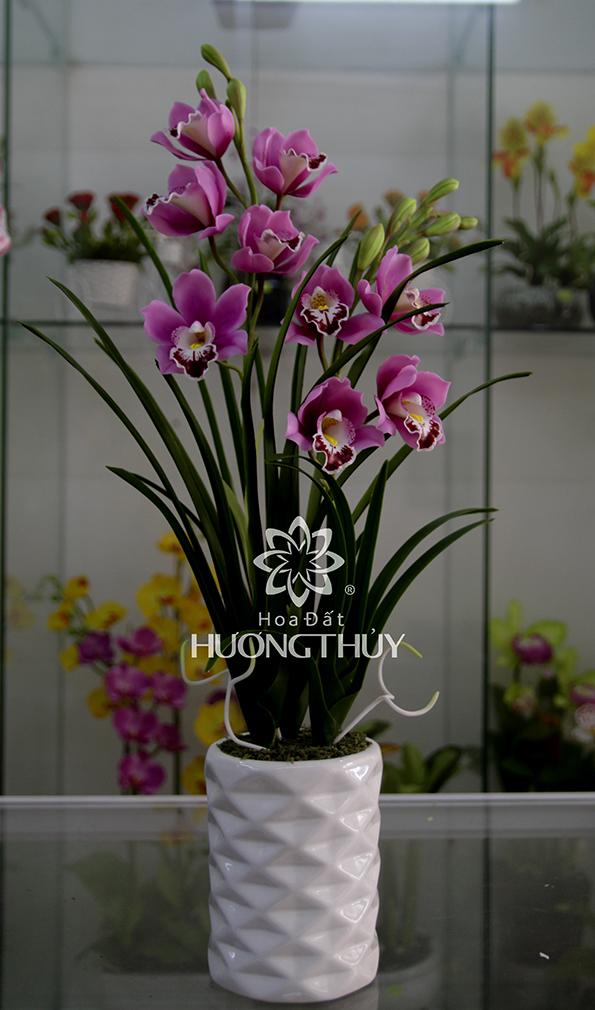 Hoa Địa lan tím: 2 cành 9 bông