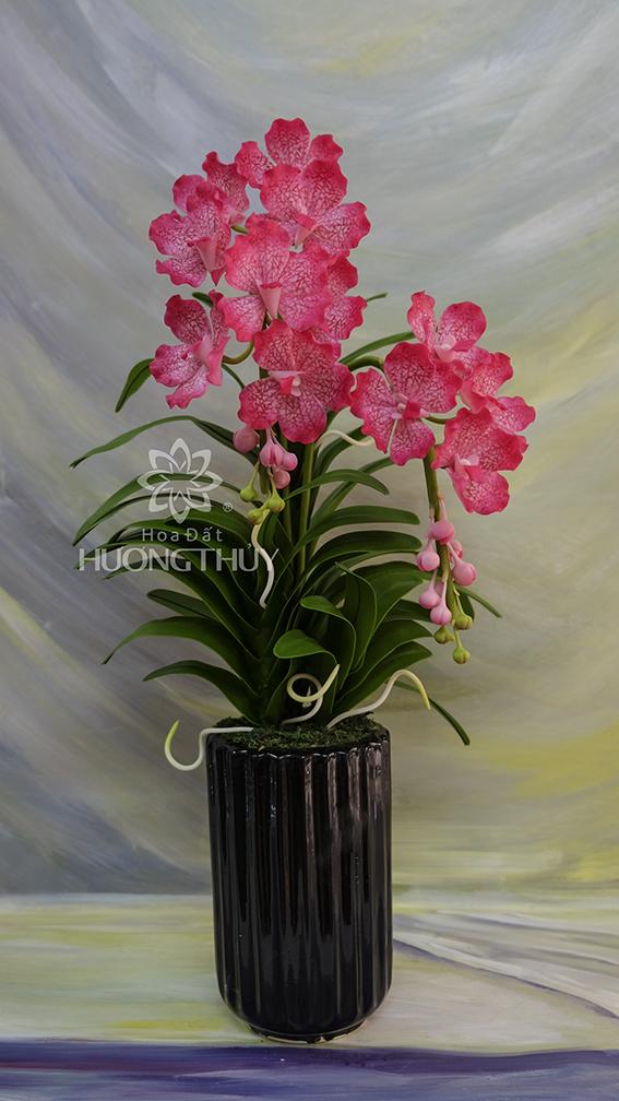 Van đa gân nước màu hồng cỡ trung: cao 55cm – ngang 25cm