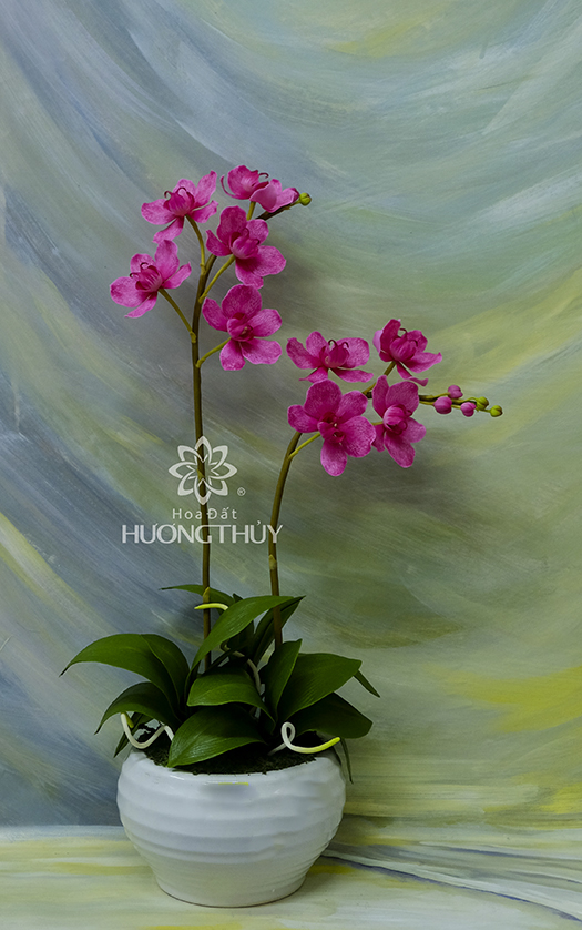Lan Hồ điệp (gân nước) cỡ trung màu hồng: Cao 56cm – ngang 23- sâu 15cm