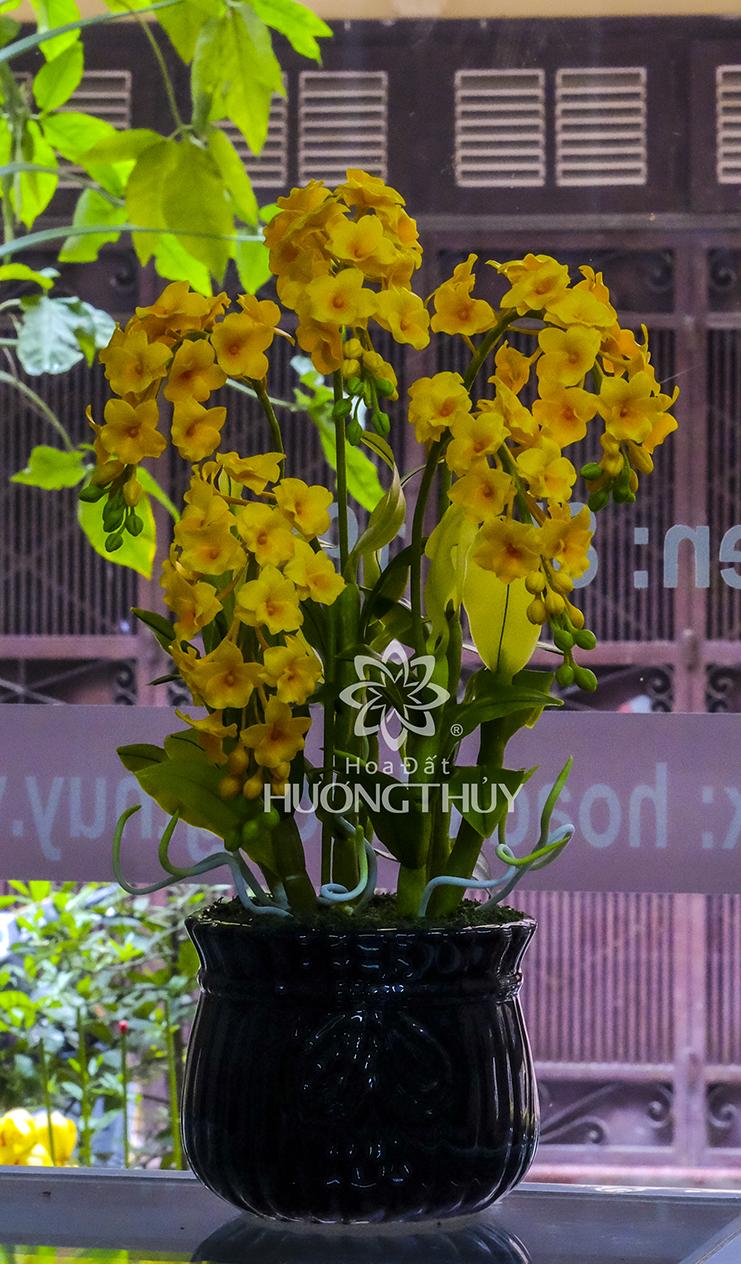 Bình hoa Hoàng lan 5 chùm