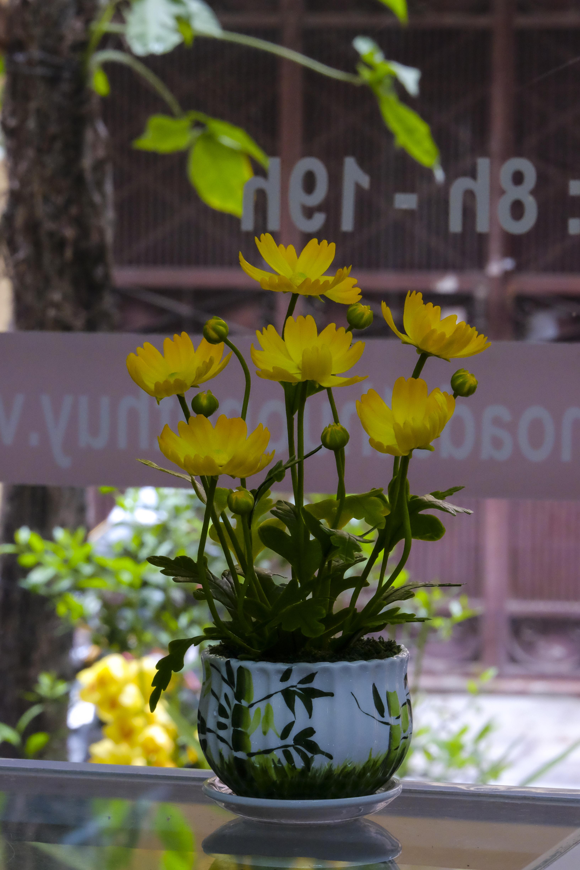 Bình hoa Bướm màu vàng: cao 25cm-ngang 18cm