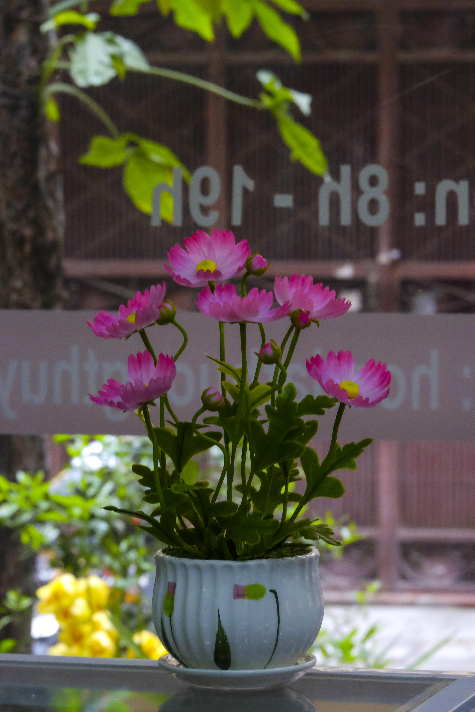 Bình hoa Bướm màu hồng: cao 25cm-ngang 18cm