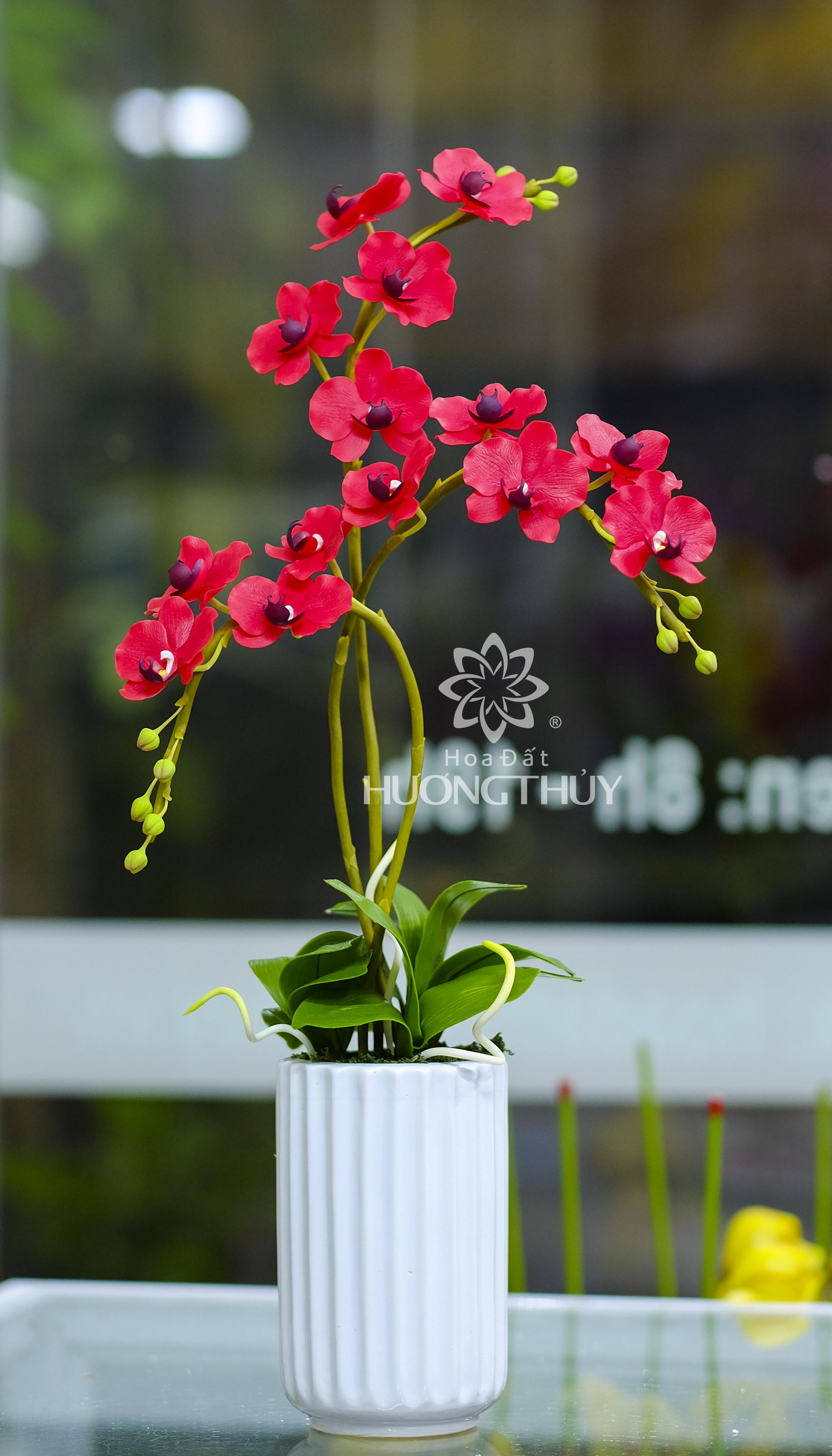 Hồ điệp đỏ: cao 65cm