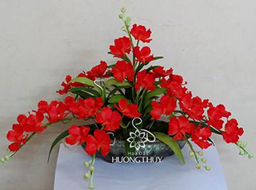 Hoa Đất Hương Thủy-Đĩa lan Van-đa đỏ