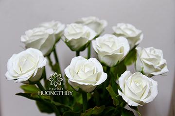 Hoa đất Hương Thủy -Hoa hồng trắng