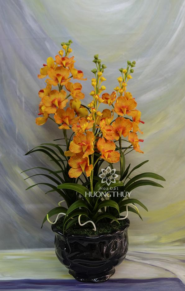 Lan Van-đa màu cam gân nước: Cao 70 – ngang 36 – sâu 25cm