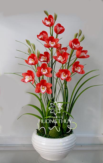 Địa lan đỏ 3 cành: Cao 75cm