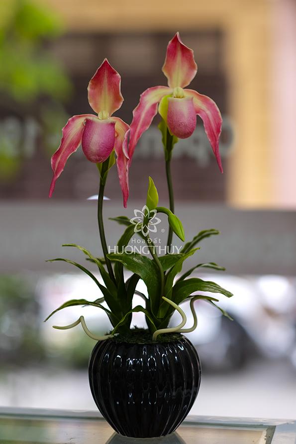 Hoa lan Hài râu màu hồng 2 bông